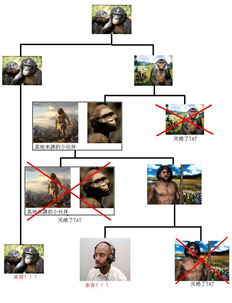 进化论示意